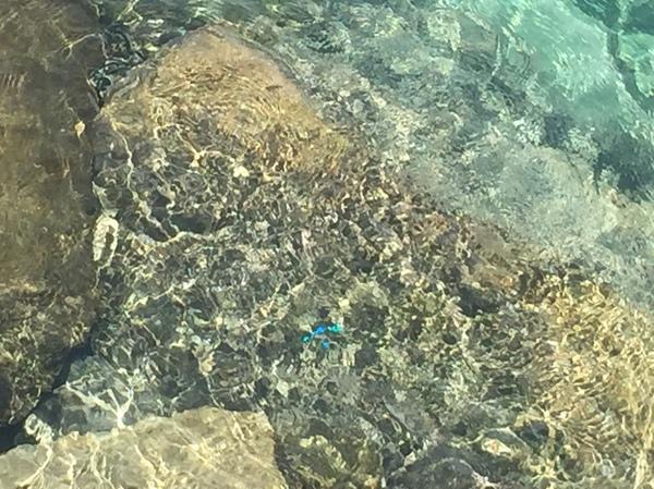 石垣島の海。青色魚。9月。