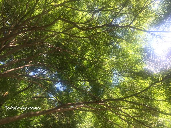 木自然癒し