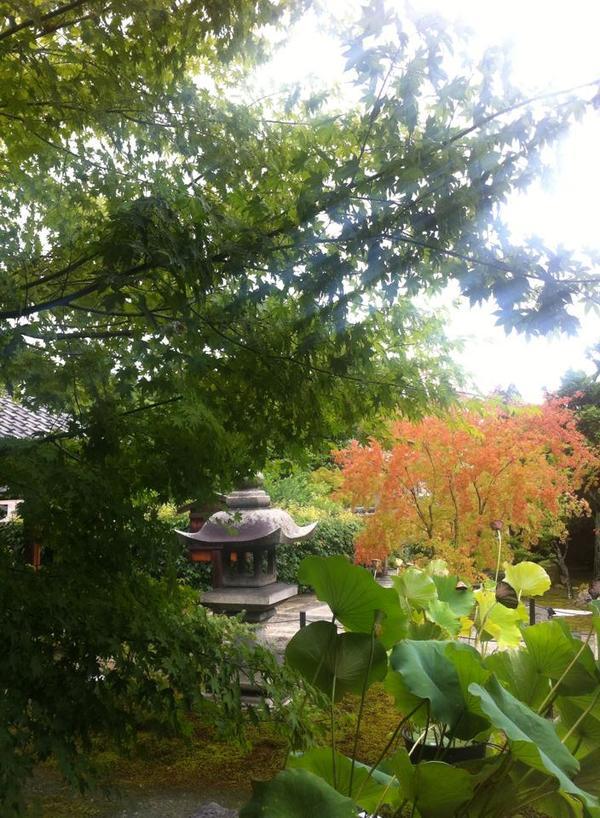 京都お寺青紅葉木自然癒し