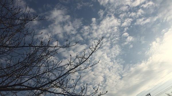 木写真空写真春3月