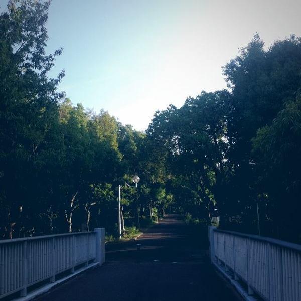 道風景写真カメラ橋木自然