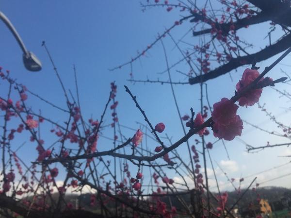梅の花木春写真カメラiPhone